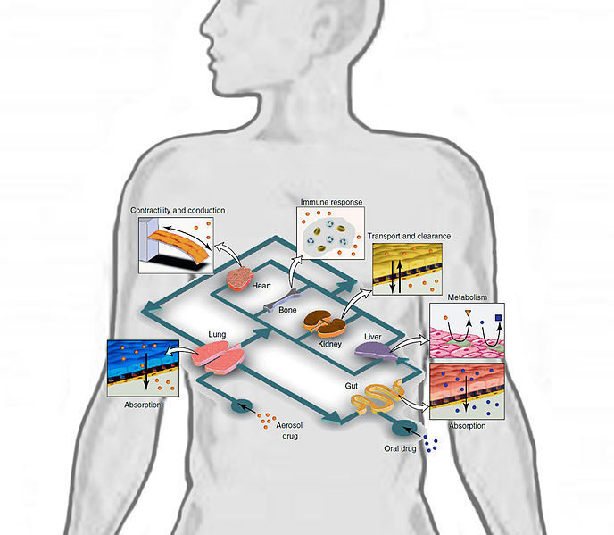 Conceptual Schematic of a Human-on-a-chip
